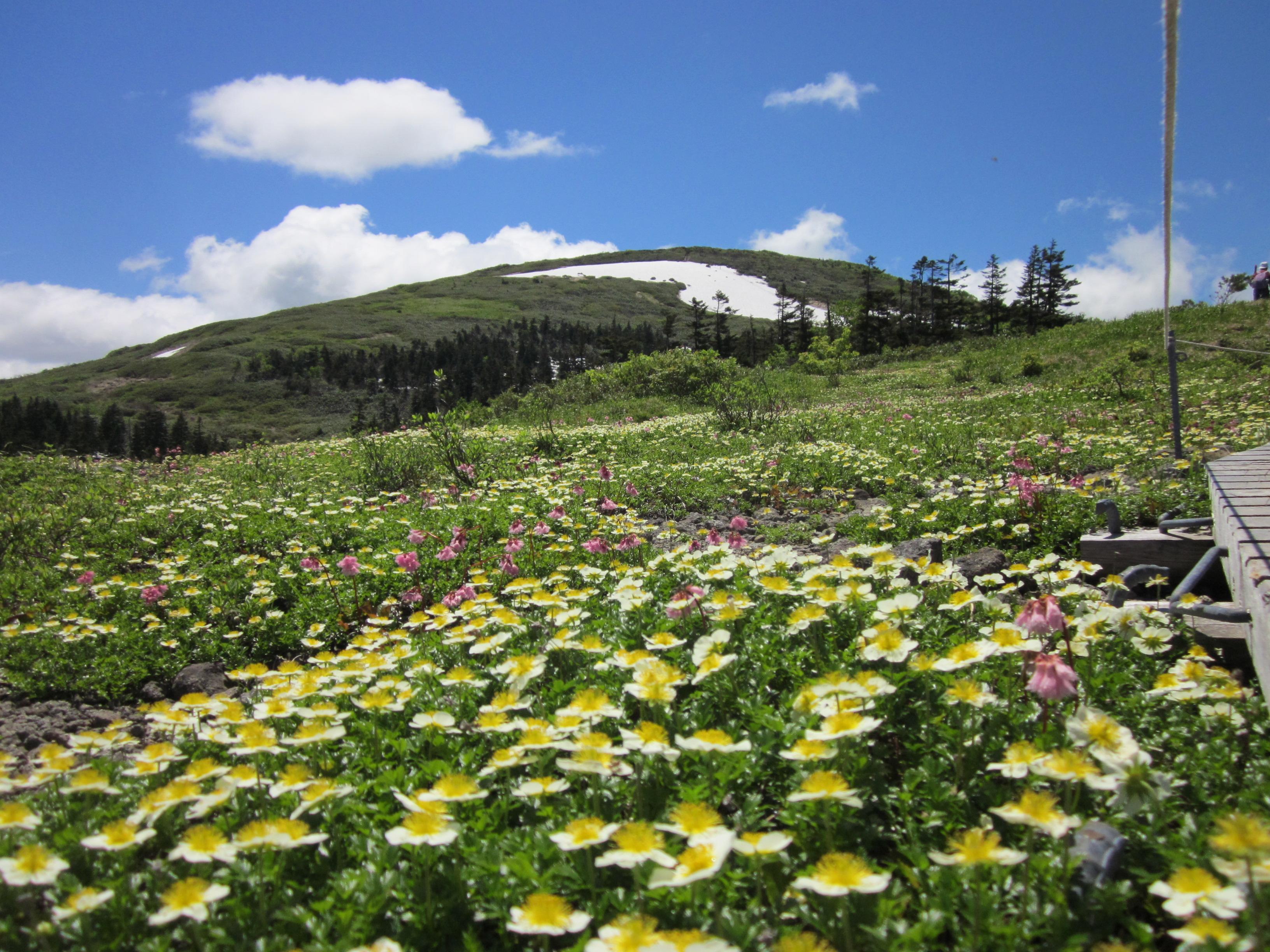 春の森吉山