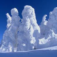 冬の森吉山【樹氷平】